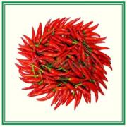 перец Чили (стручок)