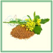 Горчица желтая (зерно)
